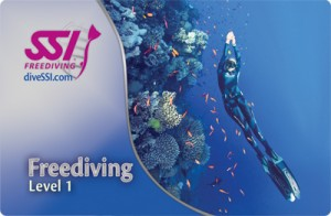 Обучение фридайвингу в Санкт-Петербурге SSI Freediving Level 1, курсы фридайвинга