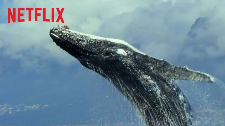 документальный сериал Netflix Our Planet